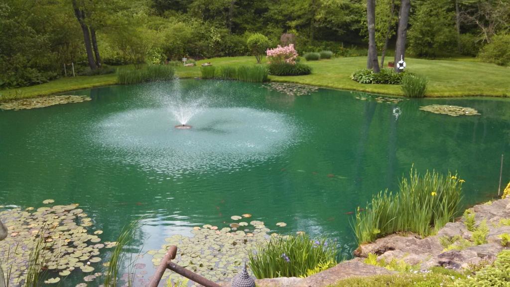 Красивый декоративный пруд.