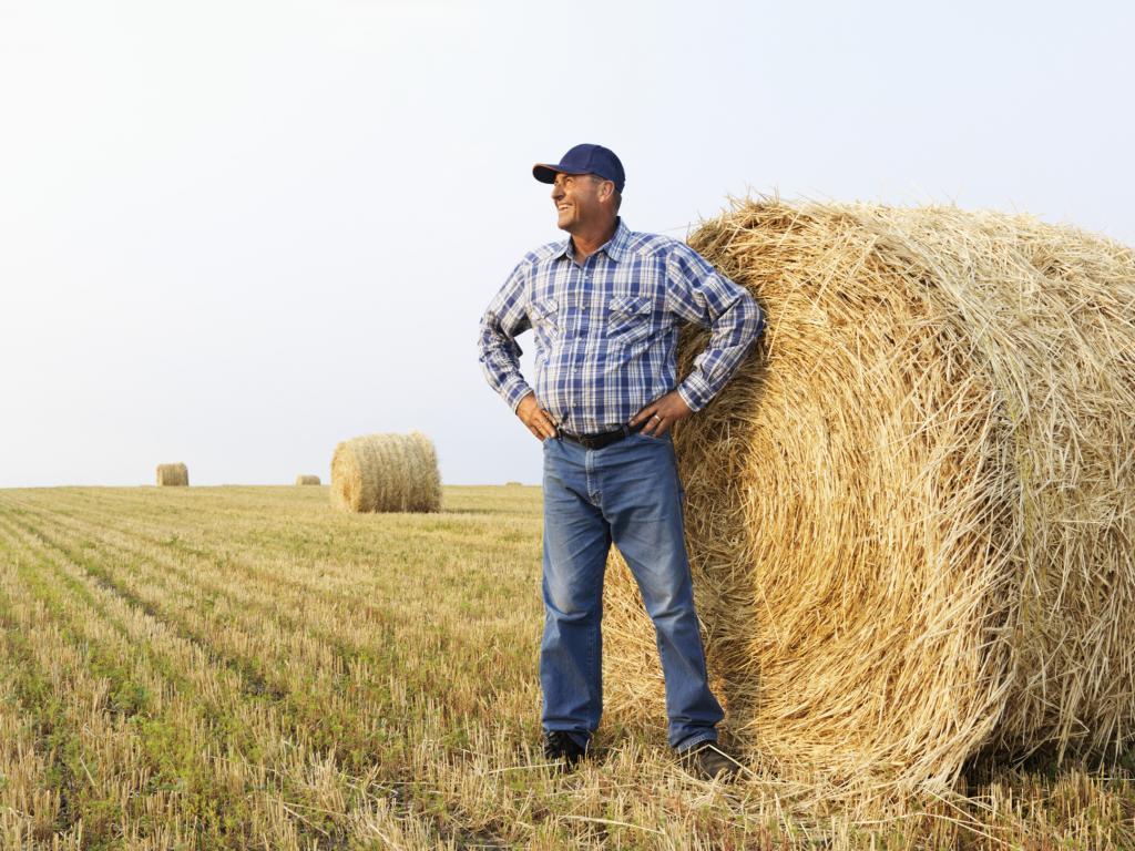 крестьянское фермерское хозяйство ип