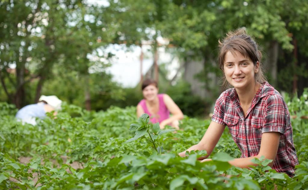 Девушки собирают урожай.