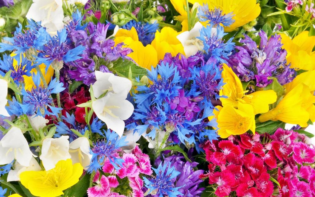 Цветочный магазин с нуля бизнес план