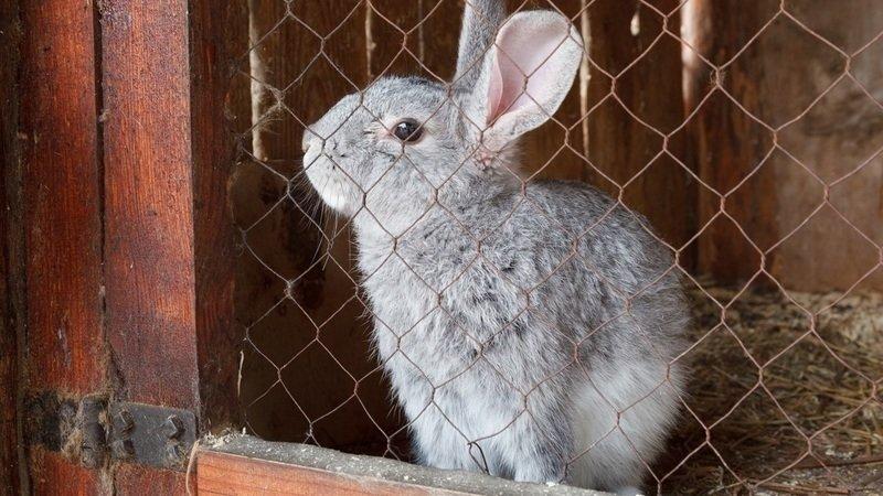 разведение кроликов как бизнес отзывы