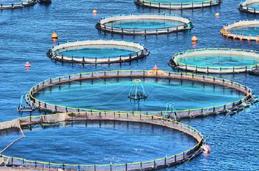 Садковый метод разведения рыбы