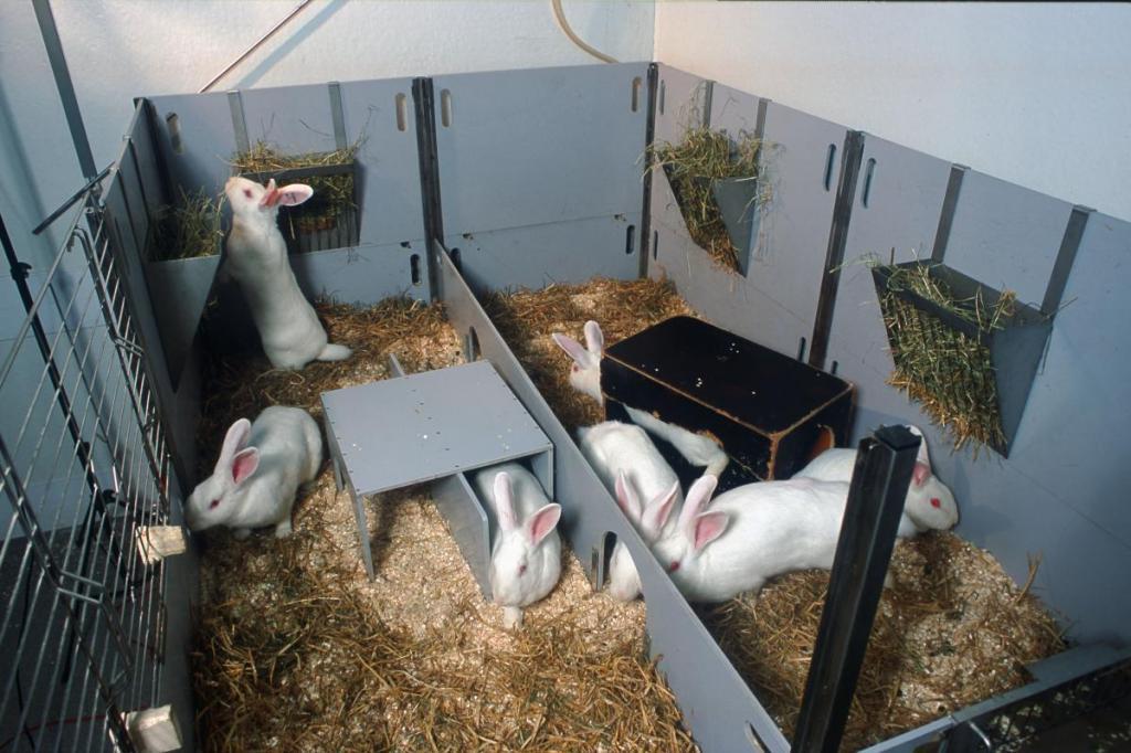 разведение кроликов домашний бизнес